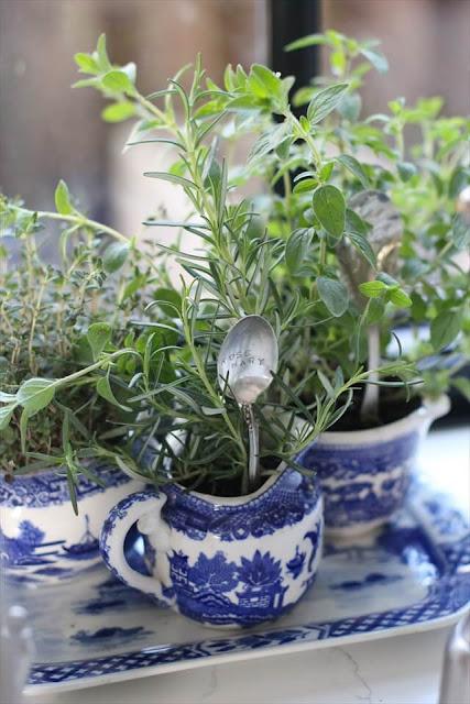 الزراعة المنزلية, الزراعة في المنزل, زراعة البيوت, طريقة الزراعة المنزلية, ديكورات نباتية, ديكور بالنيات, ديكور النبات داخل الشقق