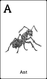 Hewan Semut dalam Kartu Animal 4D+