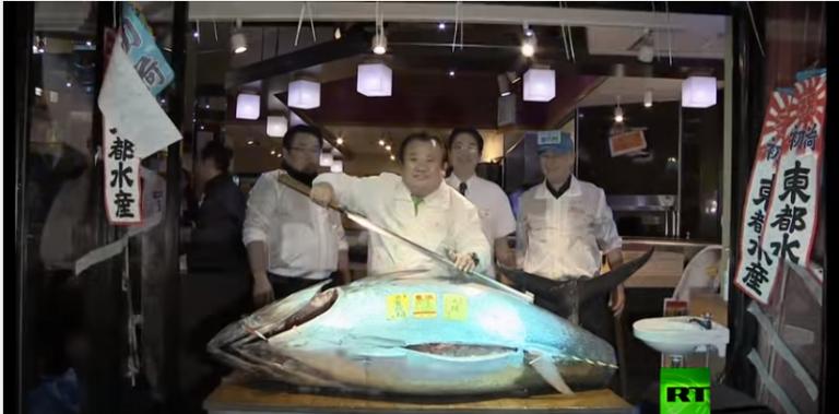بالفيديو |أغلي سمكة تونة تٌباع في مزاد علني لن تتخيل السعر #مدهش