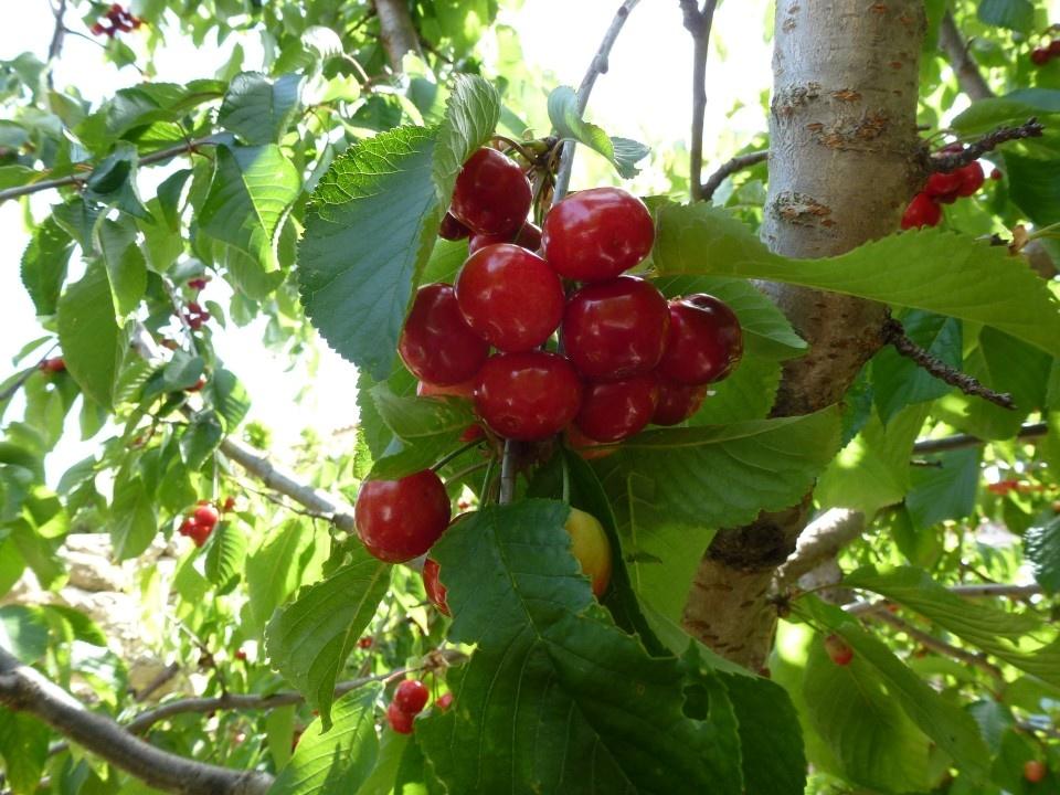 Art de bricolage conseils de jardinage de juin for Conseil de jardinage
