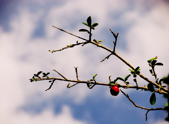 photovanes, folhas, 8on8, natureza, galhos, árvores, céu, vida, vanessa vieira, fotografia, vanessa vieira fotografia
