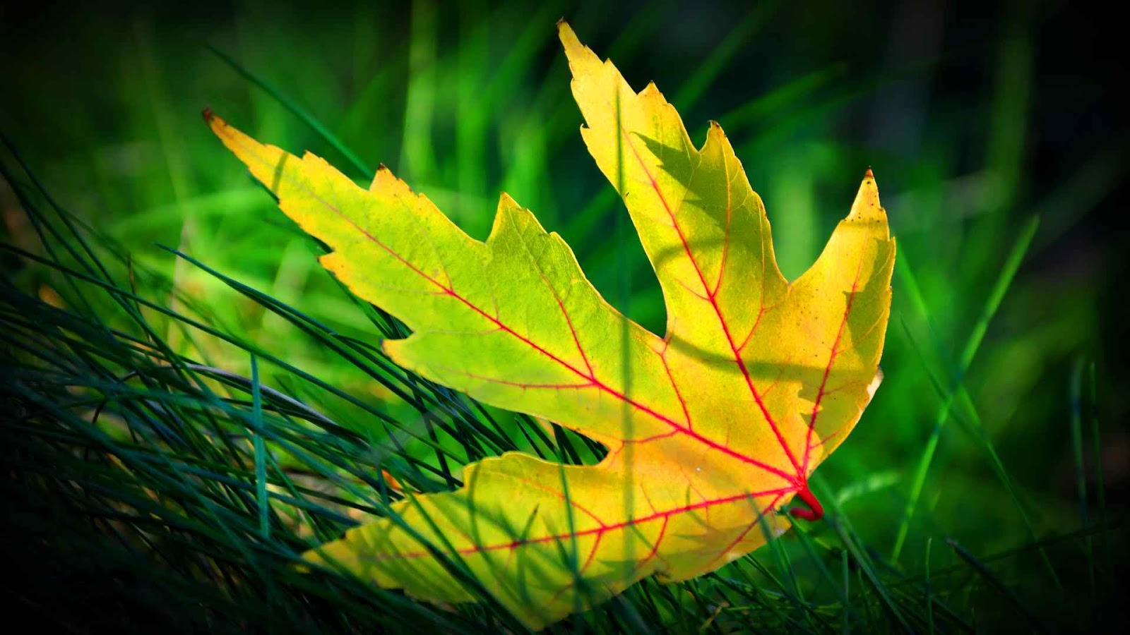 Hd wallpaper mobile screen - Most Beautiful Green Leaf Spring Hd Wallpaper For Iphone Desktop Tab And All Smartphone Androidvally
