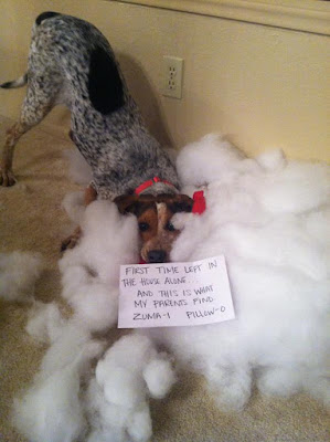 Funny Dog Humor : Sorry for that