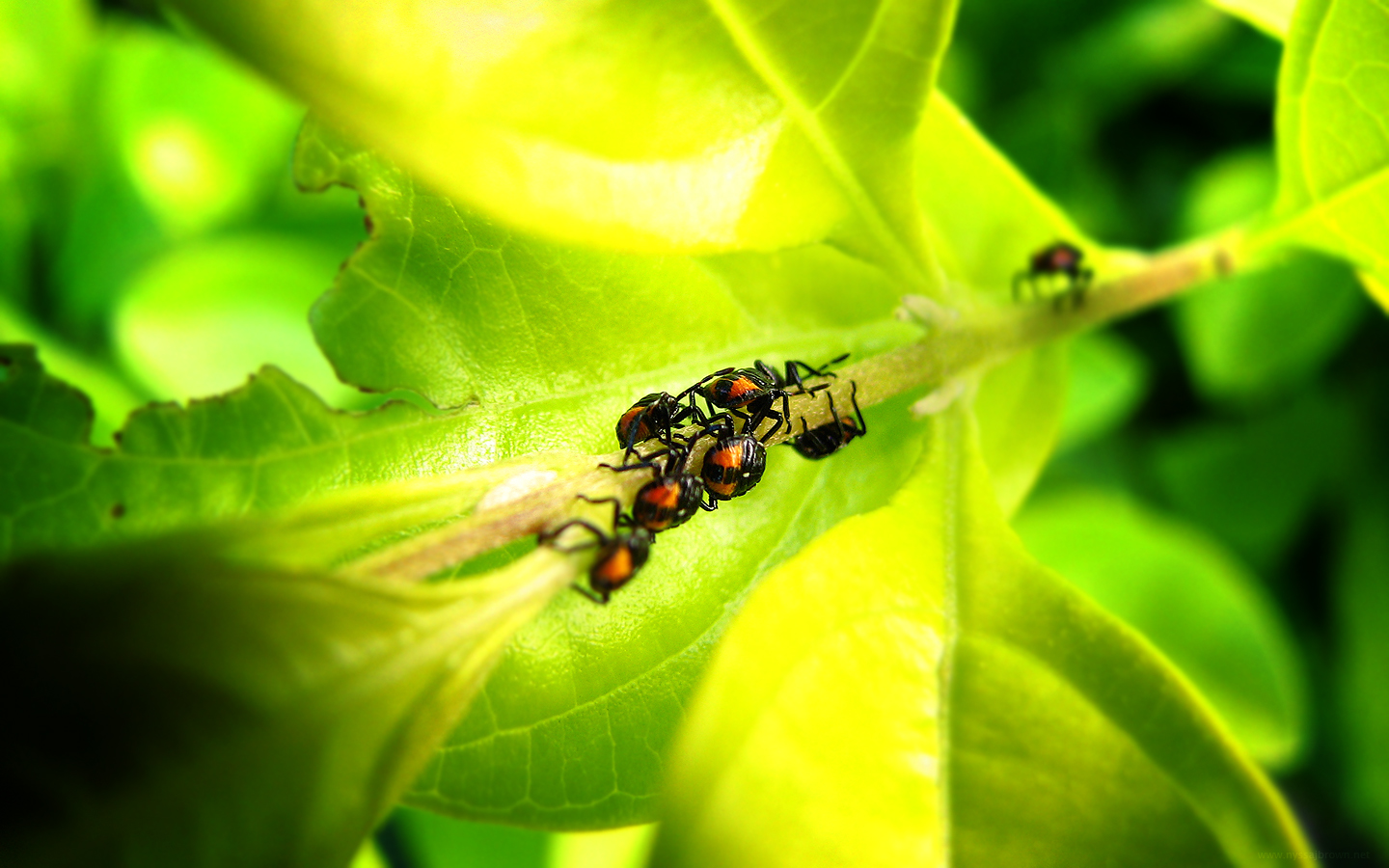 Free 3D Wallpapers Download: Insects hd wallpapers, insect ...