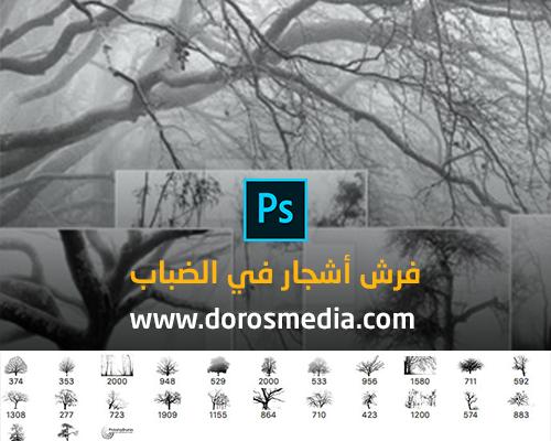فرش فوتوشوب فرش أشجار في الضباب الرائعة لبرنامج الادوبي فوتوشوب