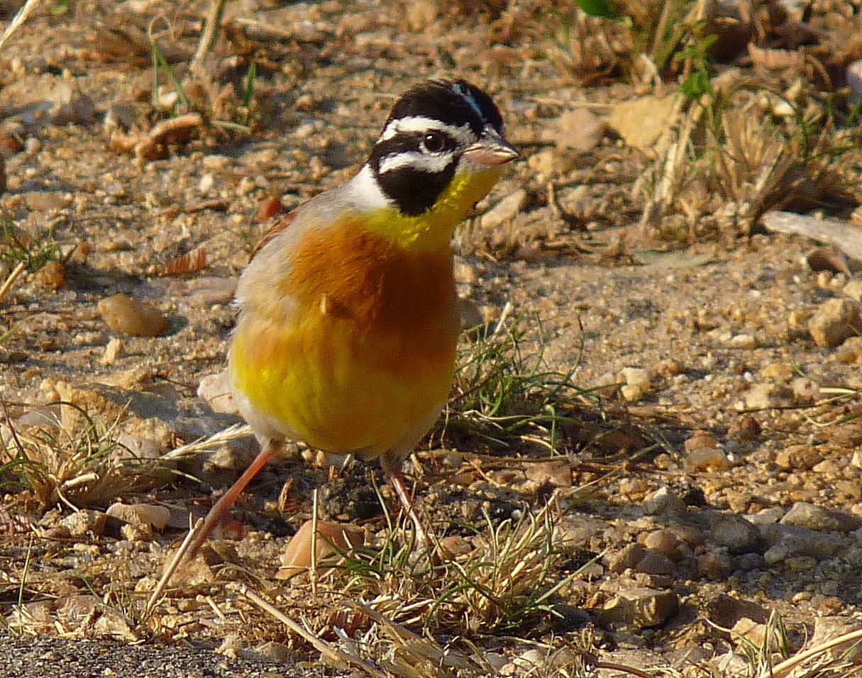 Birding For Pleasure: WILD BIRD WEDNESDAY - More birds ...