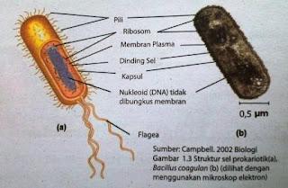 Sel dan Jaringannya Sebagai Unit Struktur dan Fungsi Kehidupan