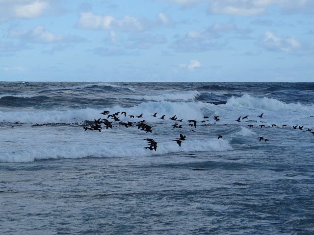 Flock of birds at the Cape of Good Hope in South Africa