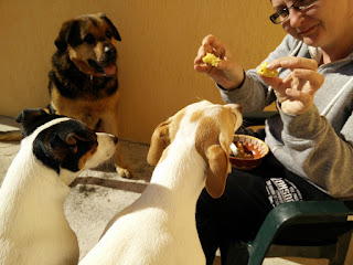 The end of our lunch time and all the puppies are hungry
