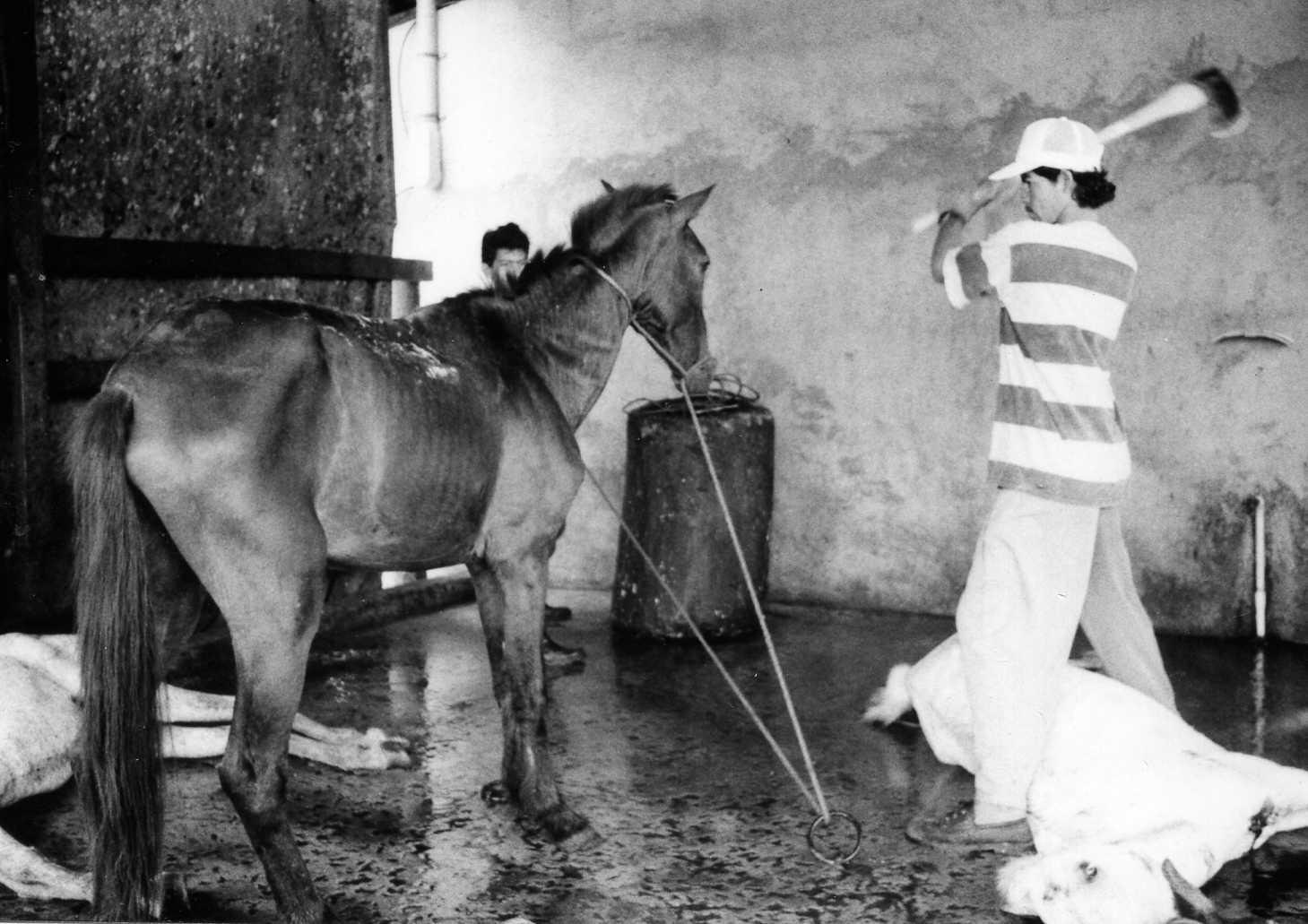 Knullad av häst