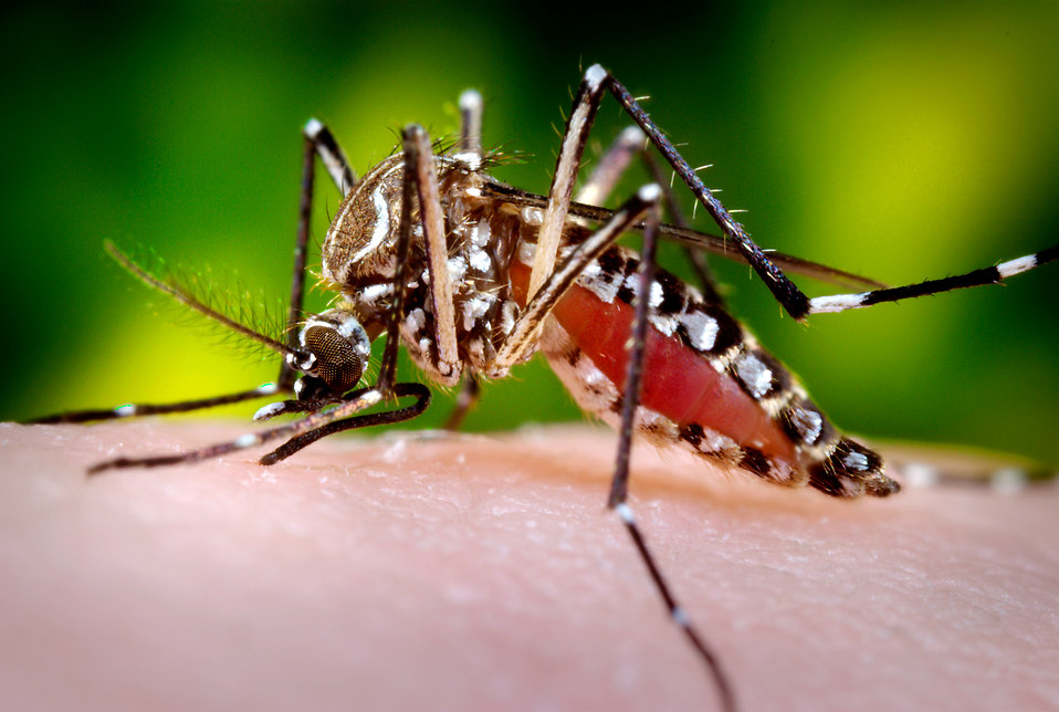persuasive speech prevent aedes mosquito (2017) annual meetings of the michigan academy, western michigan university, march 10, 2017 michigan academician: 2017, vol 45, no 1, pp 1-239.
