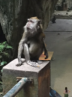 Macaque monkeys at the Batu caves.