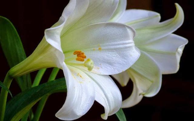 Wow! Ternyata Bunga Berikut Ini Bisa Menyemangatimu Sewaktu Bekerja Loh!