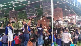 Jadwal Lomba Burung Latber Hari Sabtu Di Bekasi 2017