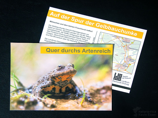 Postcard - Yellow-bellied Toad