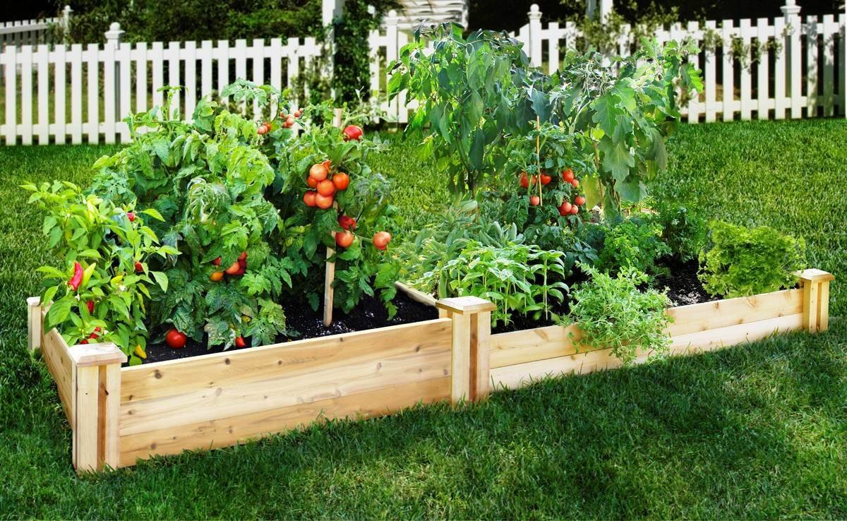 Alter Your Tomatoes ! Garden Bible