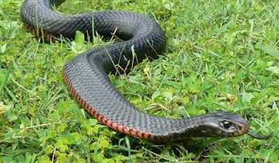 Giải giấc mơ số đề khi mơ thấy rắn