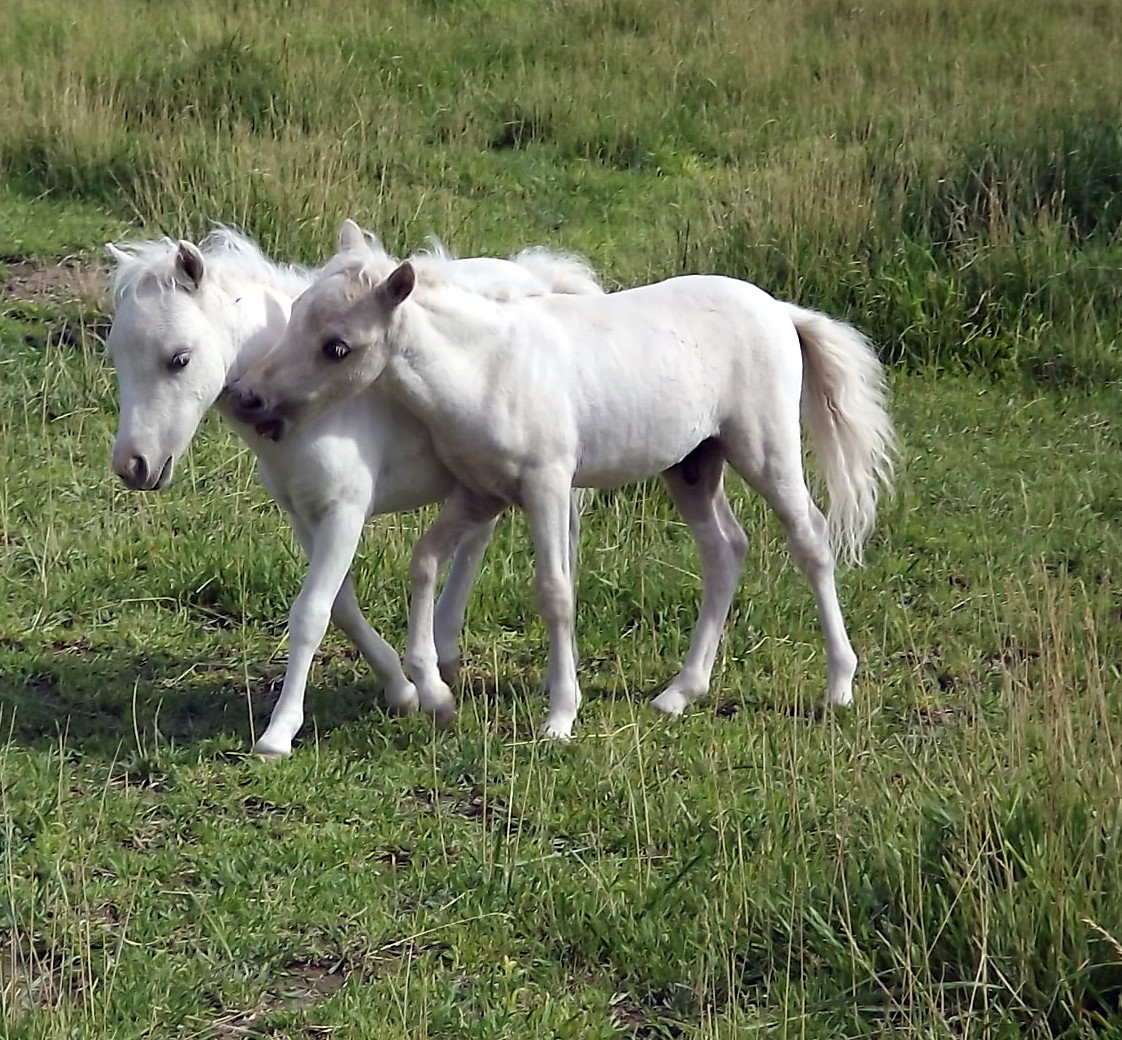 foals - photo #38