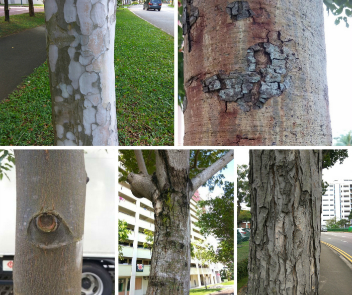 Trees of Singapore
