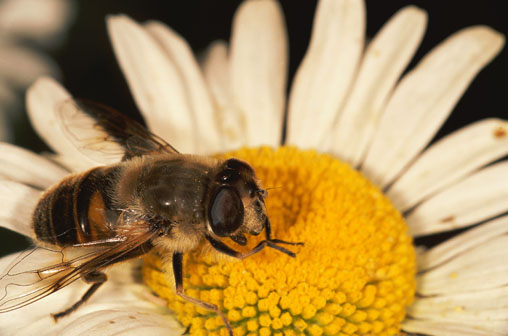 Health Is True Wealth Bee Pollen The Pollen That Rich In