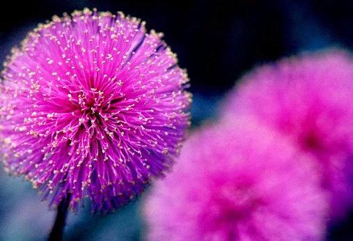 Nhung loai hoa dai dep 4