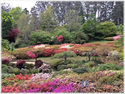 Mount Dandenong 半天遊 – National Rhododendron Gardens