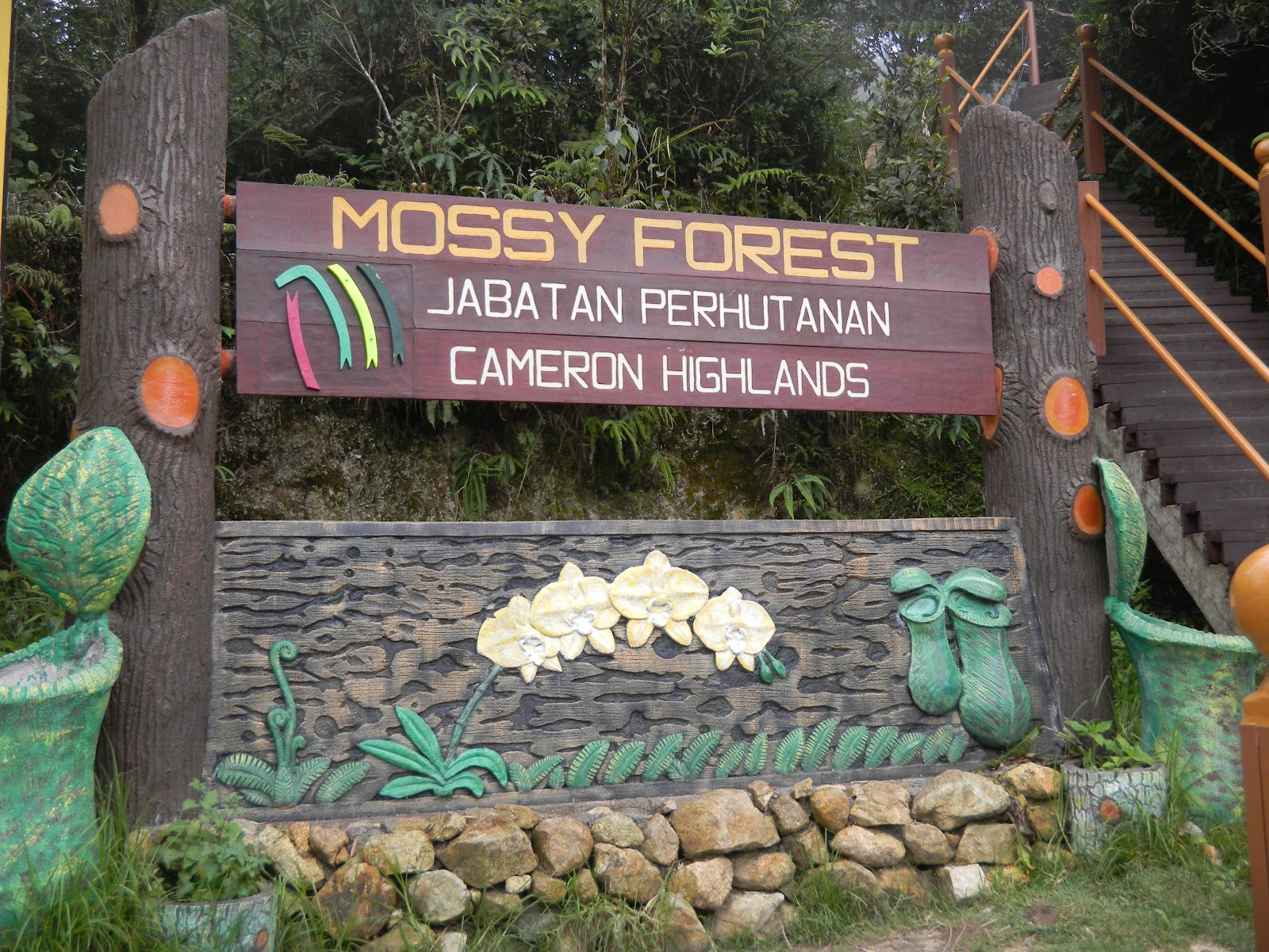 Image result for Mossy Forest malaysia