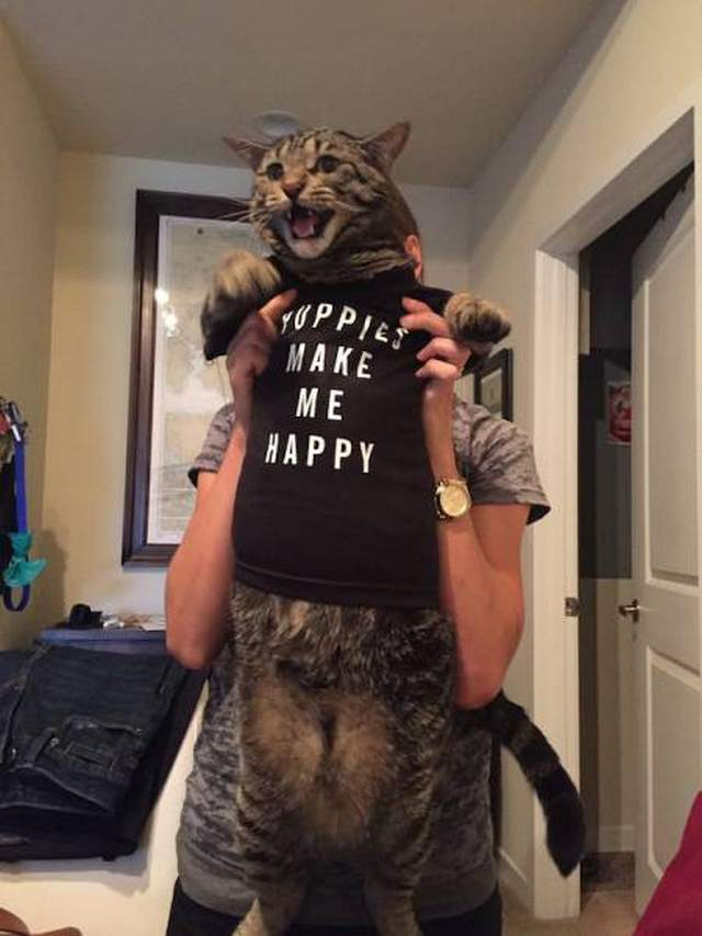 Funny cats - part 286, adorable cats, funny cat images, best cat pictures