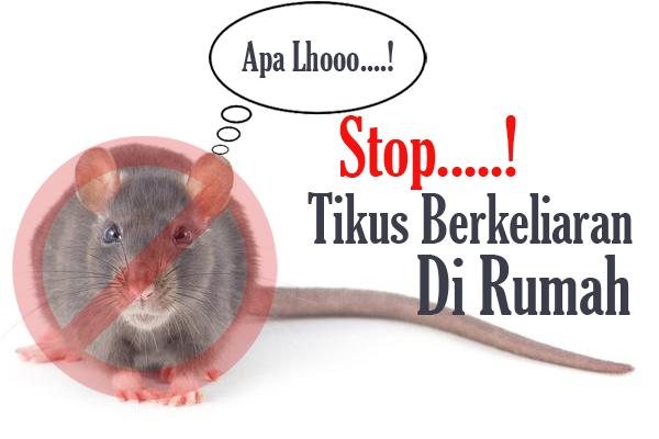 Trik Mengusir Tikus di Dalam Rumah