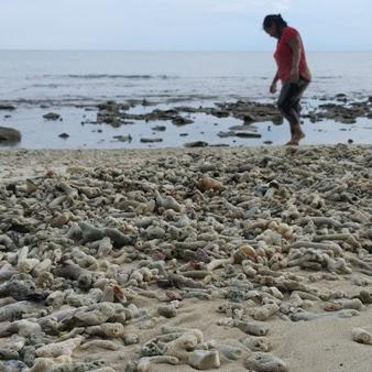 Get Lost in Mukut Village, Tioman Island