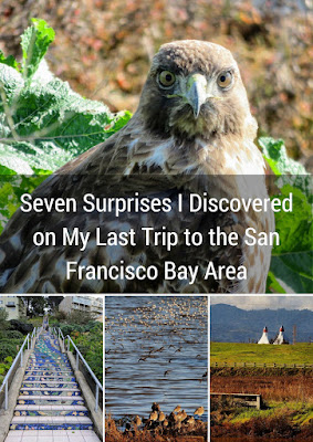 San Francisco Bay Area Surprises including birds of prey, the 16th avenue tiled steps, birding at the airport, and green fields in Mountain View