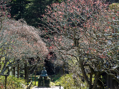 Garden of spring: Tokei-ji