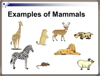 mammals examples pictures