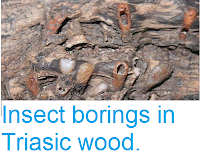 http://sciencythoughts.blogspot.co.uk/2012/02/insect-borings-in-triasic-wood.html