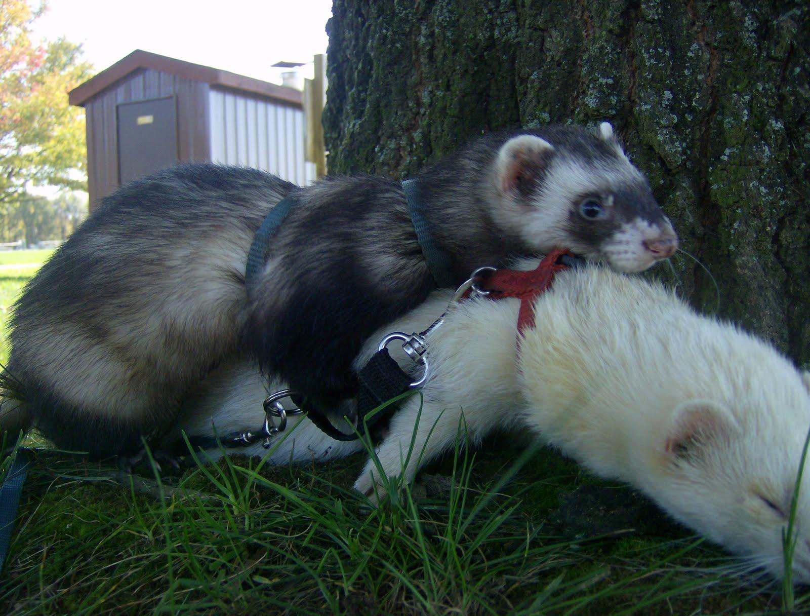 Enlightened Ferret : November 2011