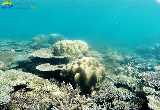 bwah laut Karimunjawa September 2017