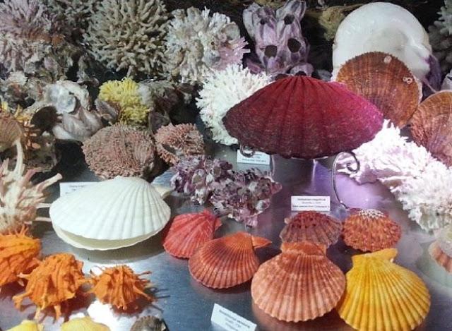 Wisata Bali Shell Museum (Kerang Bali Ubud Kuta) Informasi Lengkap Terbaru