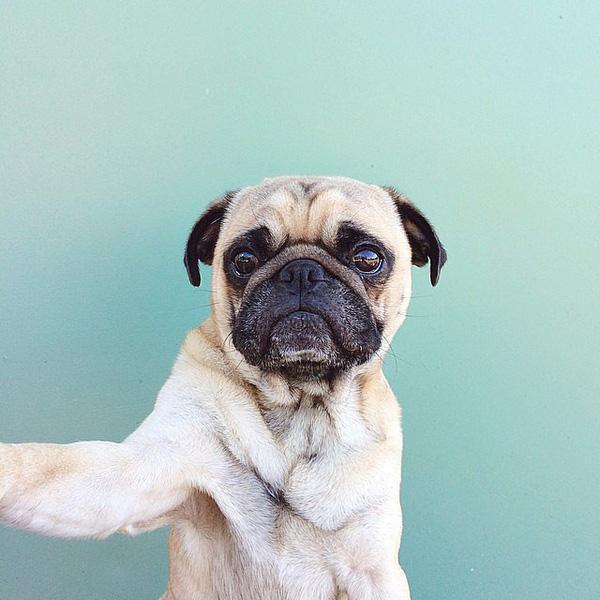 Cười té ghế với loạt ảnh selfie của thú cưng