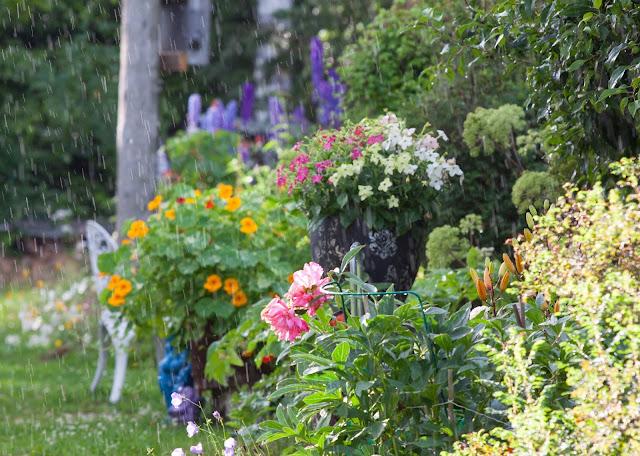 puutarhatontut