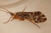 trichoptera trichoptera trichoptera trichoptera trichoptera trichoptera trichoptera trichoptera trichoptera trichoptera trichoptera trichoptera trichoptera trichoptera trichoptera trichoptera trichoptera trichoptera trichoptera trichoptera trichoptera trichoptera trichoptera trichoptera trichoptera trichoptera trichoptera trichoptera trichoptera trichoptera trichoptera trichoptera trichoptera trichoptera trichoptera trichoptera trichoptera trichoptera trichoptera trichoptera trichoptera trichoptera trichoptera trichoptera trichoptera trichoptera trichoptera trichoptera trichoptera trichoptera trichoptera trichoptera trichoptera trichoptera trichoptera trichoptera trichoptera trichoptera trichoptera trichoptera trichoptera trichoptera trichoptera trichoptera trichoptera trichoptera trichoptera trichoptera trichoptera trichoptera trichoptera trichoptera trichoptera