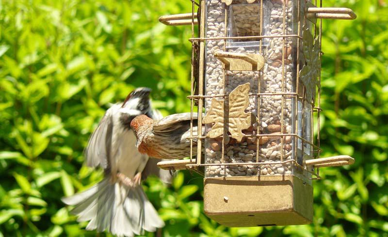 Birds, garden