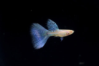 Jual Thailand Guppy Albino Grass,  Harga Thailand Guppy Albino Grass,  Toko Thailand Guppy Albino Grass,  Diskon Thailand Guppy Albino Grass,  Beli Thailand Guppy Albino Grass,  Review Thailand Guppy Albino Grass,  Promo Thailand Guppy Albino Grass,  Spesifikasi Thailand Guppy Albino Grass,  Thailand Guppy Albino Grass Murah,  Thailand Guppy Albino Grass Asli,  Thailand Guppy Albino Grass Original,  Thailand Guppy Albino Grass Jakarta,  Jenis Thailand Guppy Albino Grass,  Budidaya Thailand Guppy Albino Grass,  Peternak Thailand Guppy Albino Grass,  Cara Merawat Thailand Guppy Albino Grass,  Tips Merawat Thailand Guppy Albino Grass,  Bagaimana cara merawat Thailand Guppy Albino Grass,  Bagaimana mengobati Thailand Guppy Albino Grass,  Ciri-Ciri Hamil Thailand Guppy Albino Grass,  Kandang Thailand Guppy Albino Grass,  Ternak Thailand Guppy Albino Grass,  Makanan Thailand Guppy Albino Grass,  Thailand Guppy Albino Grass Termahal,  Adopsi Thailand Guppy Albino Grass,  Jual Cepat Thailand Guppy Albino Grass,  Thailand Guppy Albino Grass  Jakarta,  Thailand Guppy Albino Grass  Bandung,  Thailand Guppy Albino Grass  Medan,  Thailand Guppy Albino Grass  Bali,  Thailand Guppy Albino Grass  Makassar,  Thailand Guppy Albino Grass  Jambi,  Thailand Guppy Albino Grass  Pekanbaru,  Thailand Guppy Albino Grass  Palembang,  Thailand Guppy Albino Grass  Sumatera,  Thailand Guppy Albino Grass  Langsa,  Thailand Guppy Albino Grass  Lhokseumawe,  Thailand Guppy Albino Grass  Meulaboh,  Thailand Guppy Albino Grass  Sabang,  Thailand Guppy Albino Grass  Subulussalam,  Thailand Guppy Albino Grass  Denpasar,  Thailand Guppy Albino Grass  Pangkalpinang,  Thailand Guppy Albino Grass  Cilegon,  Thailand Guppy Albino Grass  Serang,  Thailand Guppy Albino Grass  Tangerang Selatan,  Thailand Guppy Albino Grass  Tangerang,  Thailand Guppy Albino Grass  Bengkulu,  Thailand Guppy Albino Grass  Gorontalo,  Thailand Guppy Albino Grass  guppy,  Thailand Guppy Albino Grass  tropical fish,  Thailand Guppy Albino Grass  aquarium fish,  Thailand Guppy Albino Grass  bubble guppies games,  Thailand Guppy Albino Grass  guppy fish,  Thailand Guppy Albino Grass  bubble guppies videos,  Thailand Guppy Albino Grass  bubble guppies episodes,  Thailand Guppy Albino Grass  bubble guppies full episodes,  Thailand Guppy Albino Grass  super guppy,  Thailand Guppy Albino Grass  bubble guppies cast,  Thailand Guppy Albino Grass  aquarium online,  Thailand Guppy Albino Grass  bubble guppies songs,  Thailand Guppy Albino Grass  tetra aquarium,  Thailand Guppy Albino Grass  guppies for sale,  Thailand Guppy Albino Grass  pregnant guppy,  Thailand Guppy Albino Grass  bubble guppies characters,  Thailand Guppy Albino Grass  bubble guppy,  Thailand Guppy Albino Grass  bubble guppies names,  Thailand Guppy Albino Grass  guppies fish,  Thailand Guppy Albino Grass  guppy breeding,  Thailand Guppy Albino Grass  breeding guppies,  Thailand Guppy Albino Grass  bubble guppie,  Thailand Guppy Albino Grass  nick jr bubble guppies,  Thailand Guppy Albino Grass  bubble guppies coloring pages,  Thailand Guppy Albino Grass  bubble guppies video,  Thailand Guppy Albino Grass  bubble guppy games,  Thailand Guppy Albino Grass  guppy aquarium,  Thailand Guppy Albino Grass  guppy care,  Thailand Guppy Albino Grass  baby guppies,  Thailand Guppy Albino Grass  design aquarium,  Thailand Guppy Albino Grass  how to breed guppies,  Thailand Guppy Albino Grass  endlers guppy,  Thailand Guppy Albino Grass  bubble guppies wiki,  Thailand Guppy Albino Grass  bubble guppies game,  Thailand Guppy Albino Grass  guppies care,  Thailand Guppy Albino Grass  guppy fry,  Thailand Guppy Albino Grass  male guppies,  Thailand Guppy Albino Grass  buble guppies,  Thailand Guppy Albino Grass  guppy fish care,  Thailand Guppy Albino Grass  female guppies,  Thailand Guppy Albino Grass  female guppy,  Thailand Guppy Albino Grass  guppy tank,  Thailand Guppy Albino Grass  types of guppies,  Thailand Guppy Albino Grass  online aquarium,  Thailand Guppy Albino Grass  guppies aquarium,  Thailand Guppy Albino Grass  pregnant guppies,  Thailand Guppy Albino Grass  guppy giving birth,  Thailand Guppy Albino Grass  what do guppies eat,  Thailand Guppy Albino Grass  guppy life span,  Thailand Guppy Albino Grass  guppy pond,  Thailand Guppy Albino Grass  guppy grass,  Thailand Guppy Albino Grass  guppies breeding,  Thailand Guppy Albino Grass  aquarium guppy,  Thailand Guppy Albino Grass  guppies giving birth,  Thailand Guppy Albino Grass  bubble guppies pictures,  Thailand Guppy Albino Grass  bubble guppies show,  Thailand Guppy Albino Grass  male guppy,  Thailand Guppy Albino Grass  guppy fish for sale,  Thailand Guppy Albino Grass  pregnant guppy fish,  Thailand Guppy Albino Grass  endler guppies,  Thailand Guppy Albino Grass  guppy babies,  Thailand Guppy Albino Grass  the bubble guppies,  Thailand Guppy Albino Grass  bubble guppies images,  Thailand Guppy Albino Grass  bubble guppies bubble puppy,  Thailand Guppy Albino Grass  guppy food,  Thailand Guppy Albino Grass  ferplast aquarium,  Thailand Guppy Albino Grass  guppy temperature,  Thailand Guppy Albino Grass  the binding isaac,  Thailand Guppy Albino Grass  guppy tail,  Thailand Guppy Albino Grass  the rebirth of isaac,  Thailand Guppy Albino Grass  the binding of isaac rebirth guppy,  Thailand Guppy Albino Grass  isaac the game,  Thailand Guppy Albino Grass  guppie fish,  Thailand Guppy Albino Grass  guppy fish breeding,  Thailand Guppy Albino Grass  guppy for sale,  Thailand Guppy Albino Grass  guppy tank mates,  Thailand Guppy Albino Grass  aquarium shop online,  Thailand Guppy Albino Grass  guppy gestation,  Thailand Guppy Albino Grass  the binding of isaac guppy,  Thailand Guppy Albino Grass  keeping guppies,  Thailand Guppy Albino Grass  guppy definition,  Thailand Guppy Albino Grass  guppy meaning,  Thailand Guppy Albino Grass  guppy breathing,  Thailand Guppy Albino Grass  fish tropical,  Thailand Guppy Albino Grass  endlers guppies,  Thailand Guppy Albino Grass  baby guppy,  Thailand Guppy Albino Grass  nickelodeon bubble guppies,  Thailand Guppy Albino Grass  guppy fish tank,  Thailand Guppy Albino Grass  guppy types,  Thailand Guppy Albino Grass  guppy fish types,  Thailand Guppy Albino Grass  guppy diseases,  Thailand Guppy Albino Grass  the binding of isaac 2,  Thailand Guppy Albino Grass  isaac the binding,  Thailand Guppy Albino Grass  wild guppies,  Thailand Guppy Albino Grass  wild guppy,  Thailand Guppy Albino Grass  fantail guppies,  Thailand Guppy Albino Grass  guppy pregnancy,  Thailand Guppy Albino Grass  lyretail guppy,  Thailand Guppy Albino Grass  pregnant guppy stages,  Thailand Guppy Albino Grass  guppy pregnant,  Thailand Guppy Albino Grass  male and female guppies,  Thailand Guppy Albino Grass  bubble guppys,  Thailand Guppy Albino Grass  guppy birth,  Thailand Guppy Albino Grass  do guppies need a heater,  Thailand Guppy Albino Grass  pictures of guppies,  Thailand Guppy Albino Grass  guppy fish life span,  Thailand Guppy Albino Grass  guppy water temperature,  Thailand Guppy Albino Grass  show guppies,  Thailand Guppy Albino Grass  black guppy,  Thailand Guppy Albino Grass  red guppy,  Thailand Guppy Albino Grass  binding isaac wiki,  Thailand Guppy Albino Grass  binding of isaac 2,  Thailand Guppy Albino Grass  moscow guppy,  Thailand Guppy Albino Grass  guppy forum,  Thailand Guppy Albino Grass  guppies online,  Thailand Guppy Albino Grass  fantail guppy,  Thailand Guppy Albino Grass  yellow guppy,  Thailand Guppy Albino Grass  snakeskin guppy,  Thailand Guppy Albino Grass  guppy fry growth chart,  Thailand Guppy Albino Grass  guppy fish food,  Thailand Guppy Albino Grass  temperature for guppies,  Thailand Guppy Albino Grass  water temperature for guppies,  Thailand Guppy Albino Grass  guppy games,  Thailand Guppy Albino Grass  black moscow guppy,  Thailand Guppy Albino Grass  full red guppy,  Thailand Guppy Albino Grass  blue moscow guppy,  Thailand Guppy Albino Grass  game isaac,  Thailand Guppy Albino Grass  male guppy fish,  Thailand Guppy Albino Grass  guppy varieties,  Thailand Guppy Albino Grass  albino guppy,  Thailand Guppy Albino Grass  guppy pregnancy stages,  Thailand Guppy Albino Grass  tequila sunrise guppy,  Thailand Guppy Albino Grass  guppy fin rot,  Thailand Guppy Albino Grass  guppy genetics,  Thailand Guppy Albino Grass  pink guppy,  Thailand Guppy Albino Grass  the guppy,  Thailand Guppy Albino Grass  highland guppy,  Thailand Guppy Albino Grass  guppy breeding tank,  Thailand Guppy Albino Grass  guppy breeds,  Thailand Guppy Albino Grass  show guppies for sale,  Thailand Guppy Albino Grass  guppies for sale uk,  Thailand Guppy Albino Grass  is my guppy pregnant,  Thailand Guppy Albino Grass  guppies having babies,  Thailand Guppy Albino Grass  guppy female,  Thailand Guppy Albino Grass  guppy fry care,  Thailand Guppy Albino Grass  do guppies need a filter,  Thailand Guppy Albino Grass  do guppies eat their babies,  Thailand Guppy Albino Grass  do guppies sleep,  Thailand Guppy Albino Grass  aquarium 40 liter,  Thailand Guppy Albino Grass  guppy game,  Thailand Guppy Albino Grass  neon guppies,  Thailand Guppy Albino Grass  neon guppy,  Thailand Guppy Albino Grass  guppy neon,  Thailand Guppy Albino Grass  isaac of binding,  Thailand Guppy Albino Grass  moscow blue guppy,  Thailand Guppy Albino Grass  guppy tail rot,  Thailand Guppy Albino Grass  isaac the rebirth,  Thailand Guppy Albino Grass  fish guppies,  Thailand Guppy Albino Grass  guppies dying,  Thailand Guppy Albino Grass  guppy species,  Thailand Guppy Albino Grass  guppy gravid spot,  Thailand Guppy Albino Grass  the of isaac,  Thailand Guppy Albino Grass  breeding guppies for beginners,  Thailand Guppy Albino Grass  guppy breeding cycle,  Thailand Guppy Albino Grass  female guppies for sale,  Thailand Guppy Albino Grass  guppies pregnant,  Thailand Guppy Albino Grass  pregnant female guppy,  Thailand Guppy Albino Grass  caring for guppies,  Thailand Guppy Albino Grass  guppies babies,  Thailand Guppy Albino Grass  guppy fry growth,  Thailand Guppy Albino Grass  guppy tank setup,  Thailand Guppy Albino Grass  guppy fish giving birth,  Thailand Guppy Albino Grass  guppy fry food,  Thailand Guppy Albino Grass  different types of guppies,  Thailand Guppy Albino Grass  types of guppy,  Thailand Guppy Albino Grass  guppy pictures,  Thailand Guppy Albino Grass  aquarium voor beginners,  Thailand Guppy Albino Grass  guppy life cycle,  Thailand Guppy Albino Grass  guppies temperature,  Thailand Guppy Albino Grass  guppy gestation period,  Thailand Guppy Albino Grass  the binding of the isaac,  Thailand Guppy Albino Grass  feeding guppies,  Thailand Guppy Albino Grass  guppi fish,  Thailand Guppy Albino Grass  guppy fish facts,  Thailand Guppy Albino Grass  guppy breeders,  Thailand Guppy Albino Grass  guppy wiki,  Thailand Guppy Albino Grass  freshwater guppies,  Thailand Guppy Albino Grass  rare guppies,  Thailand Guppy Albino Grass  raising guppies,  Thailand Guppy Albino Grass  guppy colors,  Thailand Guppy Albino Grass  guppy strains,  Thailand Guppy Albino Grass  guppy size,  Thailand Guppy Albino Grass  turquoise guppy,  Thailand Guppy Albino Grass  leopard guppy,  Thailand Guppy Albino Grass  guppy love,  Thailand Guppy Albino Grass  guppy images,  Thailand Guppy Albino Grass  guppy plant,  Thailand Guppy Albino Grass  water temp for guppies,  Thailand Guppy Albino Grass  guppy breeding setup,  Thailand Guppy Albino Grass  guppies for sale online,  Thailand Guppy Albino Grass  guppys aquarium,  Thailand Guppy Albino Grass  guppy fish pregnant,  Thailand Guppy Albino Grass  guppy care sheet,  Thailand Guppy Albino Grass  endler guppy hybrid,  Thailand Guppy Albino Grass  baby guppy fish,  Thailand Guppy Albino Grass  female guppy fish,  Thailand Guppy Albino Grass  bubble guppies nickelodeon,  Thailand Guppy Albino Grass  guppy tanks,  Thailand Guppy Albino Grass  guppies food,  Thailand Guppy Albino Grass  best food for guppies,  Thailand Guppy Albino Grass  tropical guppies,  Thailand Guppy Albino Grass  black guppy fish,  Thailand Guppy Albino Grass  black moscow guppies,  Thailand Guppy Albino Grass  gestation period for guppies,  Thailand Guppy Albino Grass  blue neon guppy,  Thailand Guppy Albino Grass  red mosaic guppy,  Thailand Guppy Albino Grass  betta and guppies,  Thailand Guppy Albino Grass  guppy fishes,  Thailand Guppy Albino Grass  fish compatible with guppies,  Thailand Guppy Albino Grass  what is a guppy fish,  Thailand Guppy Albino Grass  guppy s,  Thailand Guppy Albino Grass  guppy guppy,  Thailand Guppy Albino Grass  guppy facts,  Thailand Guppy Albino Grass  guppy behavior,  Thailand Guppy Albino Grass  green guppy,  Thailand Guppy Albino Grass  white guppy,  Thailand Guppy Albino Grass  guppy dropsy,  Thailand Guppy Albino Grass  purple guppy,  Thailand Guppy Albino Grass  bloated guppy,  Thailand Guppy Albino Grass  angelfish and guppies,  Thailand Guppy Albino Grass  fin rot guppy,  Thailand Guppy Albino Grass  guppies keep dying,  Thailand Guppy Albino Grass  mollies and guppies,  Thailand Guppy Albino Grass  stages of guppy pregnancy,  Thailand Guppy Albino Grass  south african guppies,  Thailand Guppy Albino Grass  mosaic guppy,  Thailand Guppy Albino Grass  guppy cartoon,  Thailand Guppy Albino Grass  breeding guppy,  Thailand Guppy Albino Grass  aquarium guppies,  Thailand Guppy Albino Grass  pregnant guppie,  Thailand Guppy Albino Grass  female guppy pregnant,  Thailand Guppy Albino Grass  guppy tank size,  Thailand Guppy Albino Grass  guppies tank mates,  Thailand Guppy Albino Grass  do guppies give live birth,  Thailand Guppy Albino Grass  buy guppies,  Thailand Guppy Albino Grass  food for guppies,  Thailand Guppy Albino Grass  types of guppy fish,  Thailand Guppy Albino Grass  guppy disease,  Thailand Guppy Albino Grass  tropical fish guppies,  Thailand Guppy Albino Grass  black guppies,  Thailand Guppy Albino Grass  guppy black,  Thailand Guppy Albino Grass  red guppies,  Thailand Guppy Albino Grass  red guppy fish,  Thailand Guppy Albino Grass  moscow guppies,  Thailand Guppy Albino Grass  guppies and bettas,  Thailand Guppy Albino Grass  guppy fish information,  Thailand Guppy Albino Grass  guppy fish images,  Thailand Guppy Albino Grass  all about guppies,  Thailand Guppy Albino Grass  guppy breeder,  Thailand Guppy Albino Grass  guppys online,  Thailand Guppy Albino Grass  guppy poecilia reticulata,  Thailand Guppy Albino Grass  guppy a,  Thailand Guppy Albino Grass  purple guppies,  Thailand Guppy Albino Grass  beautiful guppies,  Thailand Guppy Albino Grass  guppy pdf,  Thailand Guppy Albino Grass  guppy swimming vertically,  Thailand Guppy Albino Grass  guppy names,  Thailand Guppy Albino Grass  yellow guppies,  Thailand Guppy Albino Grass  male guppies fighting,  Thailand Guppy Albino Grass  guppies and tetras,  Thailand Guppy Albino Grass  saltwater guppies,  Thailand Guppy Albino Grass  guppies and mollies,  Thailand Guppy Albino Grass  the guppies,  Thailand Guppy Albino Grass  breeding guppies in community tank,  Thailand Guppy Albino Grass  breed guppies,  Thailand Guppy Albino Grass  live guppies for sale,  Thailand Guppy Albino Grass  guppies fish for sale,  Thailand Guppy Albino Grass  breeding guppies for profit,  Thailand Guppy Albino Grass  guppies aquarium products,  Thailand Guppy Albino Grass  taking care of guppies,  Thailand Guppy Albino Grass  guppies fish care,  Thailand Guppy Albino Grass  john endler guppies,  Thailand Guppy Albino Grass  guppy fish babies,  Thailand Guppy Albino Grass  male and female guppy,  Thailand Guppy Albino Grass  guppy fry development,  Thailand Guppy Albino Grass  guppy fry stages,  Thailand Guppy Albino Grass  guppies fish tank,  Thailand Guppy Albino Grass  guppies tank,  Thailand Guppy Albino Grass  guppy fry tank,  Thailand Guppy Albino Grass  female guppy giving birth,  Thailand Guppy Albino Grass  pregnant guppy giving birth,  Thailand Guppy Albino Grass  guppies birth,  Thailand Guppy Albino Grass  guppy give birth,  Thailand Guppy Albino Grass  guppies types,  Thailand Guppy Albino Grass  how much do guppies cost,  Thailand Guppy Albino Grass  do guppies eat algae,  Thailand Guppy Albino Grass  guppy diseases pictures,  Thailand Guppy Albino Grass  pregnant guppy pictures,  Thailand Guppy Albino Grass  pictures of guppy fish,  Thailand Guppy Albino Grass  guppy fish diseases,  Thailand Guppy Albino Grass  show guppy,  Thailand Guppy Albino Grass  guppy tropical fish,  Thailand Guppy Albino Grass  guppies tropical fish,  Thailand Guppy Albino Grass  half black guppy,  Thailand Guppy Albino Grass  neon blue guppy,  Thailand Guppy Albino Grass  guppies and neon tetras,  Thailand Guppy Albino Grass  binding of the isaac,  Thailand Guppy Albino Grass  moscow blue guppies,  Thailand Guppy Albino Grass  of isaac game,  Thailand Guppy Albino Grass  feeding guppy fry,  Thailand Guppy Albino Grass  game the binding of isaac,  Thailand Guppy Albino Grass  the binding of isaac the game,  Thailand Guppy Albino Grass  blue guppy fish,  Thailand Guppy Albino Grass  fish that can live with guppies,  Thailand Guppy Albino Grass  images of guppy fish,  Thailand Guppy Albino Grass  guppy online,  Thailand Guppy Albino Grass  albino guppies,  Thailand Guppy Albino Grass  pics of guppies,  Thailand Guppy Albino Grass  my guppies keep dying,  Thailand Guppy Albino Grass  guppy colours,  Thailand Guppy Albino Grass  guppy growth chart,  Thailand Guppy Albino Grass  golden guppy,  Thailand Guppy Albino Grass  colorful guppies,  Thailand Guppy Albino Grass  columnaris guppy,  Thailand Guppy Albino Grass  guppy diet,  Thailand Guppy Albino Grass  dragon guppy,  Thailand Guppy Albino Grass  atfg guppy,  Thailand Guppy Albino Grass  blue diamond guppy,  Thailand Guppy Albino Grass  gold guppy,  Thailand Guppy Albino Grass  guppy scientific name,  Thailand Guppy Albino Grass  guppies fighting,  Thailand Guppy Albino Grass  pingu guppy,  Thailand Guppy Albino Grass  trinidadian guppies,  Thailand Guppy Albino Grass  dropsy guppy,  Thailand Guppy Albino Grass  fat guppy,  Thailand Guppy Albino Grass  guppy guppies,  Thailand Guppy Albino Grass  guppy singapore,  Thailand Guppy Albino Grass  sunset guppy,  Thailand Guppy Albino Grass  guppy natural habitat,  Thailand Guppy Albino Grass  guppies breeding cycle,  Thailand Guppy Albino Grass  breeding tank for guppies,  Thailand Guppy Albino Grass  guppy breeding guide,  Thailand Guppy Albino Grass  guppies fish breeding,  Thailand Guppy Albino Grass  guppy breeding trap,  Thailand Guppy Albino Grass  guppy breeding tank setup,  Thailand Guppy Albino Grass  guppy sale,  Thailand Guppy Albino Grass  rare guppies for sale,  Thailand Guppy Albino Grass  endler guppies for sale,  Thailand Guppy Albino Grass  aquarium de guppy,  Thailand Guppy Albino Grass  pregnant guppy behavior,  Thailand Guppy Albino Grass  guppie care,  Thailand Guppy Albino Grass  guppy care guide,  Thailand Guppy Albino Grass  baby guppy care,  Thailand Guppy Albino Grass  guppy having babies,  Thailand Guppy Albino Grass  guppies male or female,  Thailand Guppy Albino Grass  guppies female,  Thailand Guppy Albino Grass  guppy fish female,  Thailand Guppy Albino Grass  guppies fry,  Thailand Guppy Albino Grass  raising guppy fry,  Thailand Guppy Albino Grass  guppy birth signs,  Thailand Guppy Albino Grass  guppies live birth,  Thailand Guppy Albino Grass  guppy fish pictures,  Thailand Guppy Albino Grass  guppies pictures,  Thailand Guppy Albino Grass  female guppy pictures,  Thailand Guppy Albino Grass  life cycle of a guppy,  Thailand Guppy Albino Grass  guppies water temperature,  Thailand Guppy Albino Grass  tropical fish guppy,  Thailand Guppy Albino Grass  tropical guppy,  Thailand Guppy Albino Grass  moscow black guppy,  Thailand Guppy Albino Grass  neon tetras and guppies,  Thailand Guppy Albino Grass  guppy tails,  Thailand Guppy Albino Grass  guppy feeding,  Thailand Guppy Albino Grass  bettas and guppies,  Thailand Guppy Albino Grass  guppies and betta,  Thailand Guppy Albino Grass  can guppies live with bettas,  Thailand Guppy Albino Grass  guppy fish price,  Thailand Guppy Albino Grass  guppy fish varieties,  Thailand Guppy Albino Grass  wild guppy fish,  Thailand Guppy Albino Grass  guppys fish,  Thailand Guppy Albino Grass  guppies information,  Thailand Guppy Albino Grass  free guppies,  Thailand Guppy Albino Grass  blue glass guppy,  Thailand Guppy Albino Grass  guppy d,  Thailand Guppy Albino Grass  pink guppies,  Thailand Guppy Albino Grass  guppy behaviour,  Thailand Guppy Albino Grass  common guppy,  Thailand Guppy Albino Grass  ribbon guppy,  Thailand Guppy Albino Grass  kinds of guppies,  Thailand Guppy Albino Grass  gonopodium guppy,  Thailand Guppy Albino Grass  rare guppy,  Thailand Guppy Albino Grass  guppy compatibility,  Thailand Guppy Albino Grass  pretty guppies,  Thailand Guppy Albino Grass  snakeskin guppies,  Thailand Guppy Albino Grass  guppy anatomy,  Thailand Guppy Albino Grass  green guppies,  Thailand Guppy Albino Grass  guppies in the wild,  Thailand Guppy Albino Grass  guppy growth,  Thailand Guppy Albino Grass  guppy water temp,  Thailand Guppy Albino Grass  guppy swim bladder,  Thailand Guppy Albino Grass  german yellow guppy,  Thailand Guppy Albino Grass  guppy videos,  Thailand Guppy Albino Grass  cartoon guppy,  Thailand Guppy Albino Grass  guppy not eating,  Thailand Guppy Albino Grass  exotic guppy,  Thailand Guppy Albino Grass  breeding guppys,  Thailand Guppy Albino Grass  breeding guppy fish,  Thailand Guppy Albino Grass  guppies for sale cheap,  Thailand Guppy Albino Grass  guppy breed,  Thailand Guppy Albino Grass  cheap guppies for sale,  Thailand Guppy Albino Grass  wild guppies for sale,  Thailand Guppy Albino Grass  guppys for sale,  Thailand Guppy Albino Grass  baby guppies for sale,  Thailand Guppy Albino Grass  guppy fry for sale,  Thailand Guppy Albino Grass  guppy fish aquarium,  Thailand Guppy Albino Grass  aquarium fish guppy,  Thailand Guppy Albino Grass  care for guppies,  Thailand Guppy Albino Grass  bubble guppies nick,  Thailand Guppy Albino Grass  nick bubble guppies,  Thailand Guppy Albino Grass  guppie fry,  Thailand Guppy Albino Grass  caring for guppy fry,  Thailand Guppy Albino Grass  guppy fish tanks,  Thailand Guppy Albino Grass  female guppies giving birth,  Thailand Guppy Albino Grass  where to buy guppies,  Thailand Guppy Albino Grass  fish food for guppies,  Thailand Guppy Albino Grass  pictures of pregnant guppies,  Thailand Guppy Albino Grass  albino red guppy,  Thailand Guppy Albino Grass  moscow green guppy,  Thailand Guppy Albino Grass  purple moscow guppies,  Thailand Guppy Albino Grass  isaac of rebirth,  Thailand Guppy Albino Grass  feeding baby guppies,  Thailand Guppy Albino Grass  guppy photo,  Thailand Guppy Albino Grass  game binding of isaac,  Thailand Guppy Albino Grass  a guppy fish,  Thailand Guppy Albino Grass  compatible fish with guppies,  Thailand Guppy Albino Grass  live guppies,  Thailand Guppy Albino Grass  poecilia reticulata guppy,  Thailand Guppy Albino Grass  exotic guppies,  Thailand Guppy Albino Grass  guppy price,  Thailand Guppy Albino Grass  guppy video,  Thailand Guppy Albino Grass  guppy wallpaper,  Thailand Guppy Albino Grass  white guppies,  Thailand Guppy Albino Grass  lyretail guppies,  Thailand Guppy Albino Grass  small guppies,  Thailand Guppy Albino Grass  guppy mouth,  Thailand Guppy Albino Grass  blonde guppy,  Thailand Guppy Albino Grass  peacock guppy,  Thailand Guppy Albino Grass  looking after guppies,  Thailand Guppy Albino Grass  guppy bent spine,  Thailand Guppy Albino Grass  plants for guppies,  Thailand Guppy Albino Grass  guppy predators,  Thailand Guppy Albino Grass  beautiful guppy,  Thailand Guppy Albino Grass  guppy eyes,  Thailand Guppy Albino Grass  guppy gonopodium,  Thailand Guppy Albino Grass  singapore guppy,  Thailand Guppy Albino Grass  dropsy in guppies,  Thailand Guppy Albino Grass  guppy fungus,  Thailand Guppy Albino Grass  gubbi fish,  Thailand Guppy Albino Grass  selective breeding guppies,  Thailand Guppy Albino Grass  breeding mollies and guppies,  Thailand Guppy Albino Grass  breeds of guppies,  Thailand Guppy Albino Grass  guppies sale,  Thailand Guppy Albino Grass  guppy breeding net,  Thailand Guppy Albino Grass  rare guppy breeds,  Thailand Guppy Albino Grass  guppie breeding,  Thailand Guppy Albino Grass  albino guppies for sale,  Thailand Guppy Albino Grass  blue guppies for sale,  Thailand Guppy Albino Grass  pregnant guppies for sale,  Thailand Guppy Albino Grass  guppy aquariums,  Thailand Guppy Albino Grass  aquarium a guppy,  Thailand Guppy Albino Grass  care of guppies,  Thailand Guppy Albino Grass  baby guppies care,  Thailand Guppy Albino Grass  guppy baby fish,  Thailand Guppy Albino Grass  guppy male female,  Thailand Guppy Albino Grass  male female guppies,  Thailand Guppy Albino Grass  bubble guppies on nick jr,  Thailand Guppy Albino Grass  guppy breeder tank,  Thailand Guppy Albino Grass  buy guppy fish,  Thailand Guppy Albino Grass  baby guppy food,  Thailand Guppy Albino Grass  type of guppies,  Thailand Guppy Albino Grass  do guppies need air pump,  Thailand Guppy Albino Grass  pictures of guppies fish,  Thailand Guppy Albino Grass  picture of guppies,  Thailand Guppy Albino Grass  female guppies pictures,  Thailand Guppy Albino Grass  guppy picture,  Thailand Guppy Albino Grass  guppies life span,  Thailand Guppy Albino Grass  life span of guppies,  Thailand Guppy Albino Grass  guppy life expectancy,  Thailand Guppy Albino Grass  show quality guppies,  Thailand Guppy Albino Grass  breeding show guppies,  Thailand Guppy Albino Grass  tropical guppy fish,  Thailand Guppy Albino Grass  guppy fish game,  Thailand Guppy Albino Grass  guppies gestation period,  Thailand Guppy Albino Grass  guppies gestation,  Thailand Guppy Albino Grass  fan tail guppies,  Thailand Guppy Albino Grass  fan tailed guppies,  Thailand Guppy Albino Grass  dragon tail guppy,  Thailand Guppy Albino Grass  the rebirth of isaac game,  Thailand Guppy Albino Grass  the isaac game,  Thailand Guppy Albino Grass  guppies feeding,  Thailand Guppy Albino Grass  guppy photos,  Thailand Guppy Albino Grass  about guppy fish,  Thailand Guppy Albino Grass  yellow guppy fish,  Thailand Guppy Albino Grass  guppy fish bowl,  Thailand Guppy Albino Grass  selling guppies,  Thailand Guppy Albino Grass  guppy pics,  Thailand Guppy Albino Grass  about guppies,  Thailand Guppy Albino Grass  ifga guppies,  Thailand Guppy Albino Grass  taiwan guppy,  Thailand Guppy Albino Grass  guppies price,  Thailand Guppy Albino Grass  different kinds of guppies,  Thailand Guppy Albino Grass  guppy blog,  Thailand Guppy Albino Grass  guppy plants,  Thailand Guppy Albino Grass  guppy green,  Thailand Guppy Albino Grass  tankmates for guppies,  Thailand Guppy Albino Grass  freshwater guppy,  Thailand Guppy Albino Grass  tequila sunrise guppies,  Thailand Guppy Albino Grass  endless guppy,  Thailand Guppy Albino Grass  platies and guppies,  Thailand Guppy Albino Grass  guppy parasites,  Thailand Guppy Albino Grass  guppy pet,  Thailand Guppy Albino Grass  guppy illness,  Thailand Guppy Albino Grass  pet guppies,  Thailand Guppy Albino Grass  guppy white,  Thailand Guppy Albino Grass  guppies species,  Thailand Guppy Albino Grass  hybrid guppies,  Thailand Guppy Albino Grass  breeding tanks for guppies,  Thailand Guppy Albino Grass  guppy breeding tanks,  Thailand Guppy Albino Grass  guppy care and breeding,  Thailand Guppy Albino Grass  breeding guppies for feeders,  Thailand Guppy Albino Grass  guppy fish sale,  Thailand Guppy Albino Grass  breeding guppies for sale,  Thailand Guppy Albino Grass  guppy aquarium fish,  Thailand Guppy Albino Grass  aquarium guppy fish,  Thailand Guppy Albino Grass  guppies aquariums,  Thailand Guppy Albino Grass  pregnant guppys,  Thailand Guppy Albino Grass  pregnant female guppies,  Thailand Guppy Albino Grass  raising baby guppies,  Thailand Guppy Albino Grass  guppy fry color,  Thailand Guppy Albino Grass  guppy fry size,  Thailand Guppy Albino Grass  guppy birthing process,  Thailand Guppy Albino Grass  buying guppies,  Thailand Guppy Albino Grass  buy guppy fish online,  Thailand Guppy Albino Grass  buy guppy,  Thailand Guppy Albino Grass  homemade guppy food,  Thailand Guppy Albino Grass  pictures of female guppies,  Thailand Guppy Albino Grass  pictures of baby guppies,  Thailand Guppy Albino Grass  guppies diseases,  Thailand Guppy Albino Grass  guppy diseases symptoms,  Thailand Guppy Albino Grass  life cycle of guppies,  Thailand Guppy Albino Grass  guppy shows,  Thailand Guppy Albino Grass  show guppy breeders,  Thailand Guppy Albino Grass  is a guppy a tropical fish,  Thailand Guppy Albino Grass  binding the isaac,  Thailand Guppy Albino Grass  the of isaac game,  Thailand Guppy Albino Grass  the game isaac,  Thailand Guppy Albino Grass  guppy fish photos,  Thailand Guppy Albino Grass  photos of guppies,  Thailand Guppy Albino Grass  binding isaac game,  Thailand Guppy Albino Grass  binding game,  Thailand Guppy Albino Grass  guppies fishing report,  Thailand Guppy Albino Grass  all about guppy fish,  Thailand Guppy Albino Grass  the guppy fish,  Thailand Guppy Albino Grass  how much are guppy fish,  Thailand Guppy Albino Grass  is a guppy a fish,  Thailand Guppy Albino Grass  guppy fish wiki,  Thailand Guppy Albino Grass  guppies fish bowl,  Thailand Guppy Albino Grass  cheap guppies,  Thailand Guppy Albino Grass  fresh water guppies,  Thailand Guppy Albino Grass  how to sell guppies,  Thailand Guppy Albino Grass  pond guppies,  Thailand Guppy Albino Grass  information about guppies,  Thailand Guppy Albino Grass  guppy illnesses,  Thailand Guppy Albino Grass  guppy hatchery,  Thailand Guppy Albino Grass  guppy store,  Thailand Guppy Albino Grass  guppies fin rot,  Thailand Guppy Albino Grass  common guppies,  Thailand Guppy Albino Grass  guppy prices,  Thailand Guppy Albino Grass  guppy mouth fungus,  Thailand Guppy Albino Grass  singapore guppies,  Thailand Guppy Albino Grass  guppy book,  Thailand Guppy Albino Grass  large guppy,  Thailand Guppy Albino Grass  breading guppies,  Thailand Guppy Albino Grass  malaysia guppy,  Thailand Guppy Albino Grass  aggressive guppies,  Thailand Guppy Albino Grass  guppies diet,  Thailand Guppy Albino Grass  my guppy,  Thailand Guppy Albino Grass  robert john lechmere guppy,  Thailand Guppy Albino Grass  guppy breading,  Thailand Guppy Albino Grass  guppy forums,  Thailand Guppy Albino Grass  guppies pics,  Thailand Guppy Albino Grass  guppy fin rot treatment,  Thailand Guppy Albino Grass  the re-birth,  Thailand Guppy Albino Grass  the binding rebirth,  Thailand Guppy Albino Grass  guppies aquarium supplies,  Thailand Guppy Albino Grass  aquarium mit guppys,  Thailand Guppy Albino Grass  guppys im aquarium,  Thailand Guppy Albino Grass  fry guppy,  Thailand Guppy Albino Grass  where can i buy guppies,  Thailand Guppy Albino Grass  breeding guppies for food,  Thailand Guppy Albino Grass  guppy fish picture,  Thailand Guppy Albino Grass  binding of isaac original,  Thailand Guppy Albino Grass  the isaac of binding,  Thailand Guppy Albino Grass  rebirth of isaac game,  Thailand Guppy Albino Grass  game of isaac,  Thailand Guppy Albino Grass  guppies photos,  Thailand Guppy Albino Grass  guppy fish breeders,  Thailand Guppy Albino Grass  what is guppy fish,  Thailand Guppy Albino Grass  guppy water conditions,  Thailand Guppy Albino Grass  german guppies,  Thailand Guppy Albino Grass  laser beam guppy,  Thailand Guppy Albino Grass  the binding of rebirth,  Thailand Guppy Albino Grass  the binding of isaac a,  Thailand Guppy Albino Grass  guppy rebirth,