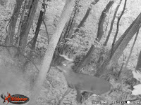 Ohio Whitetail Buck, Trail camera, Deer Hunting