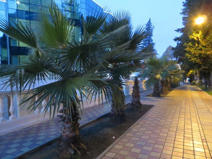 пальмы Сочи