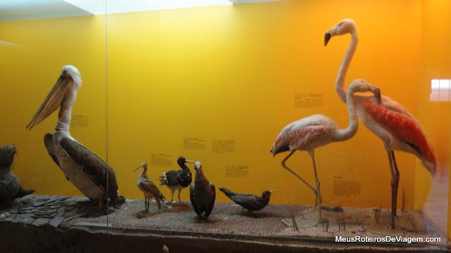 Exibições do Museo Fonck - Viña del Mar, Chile