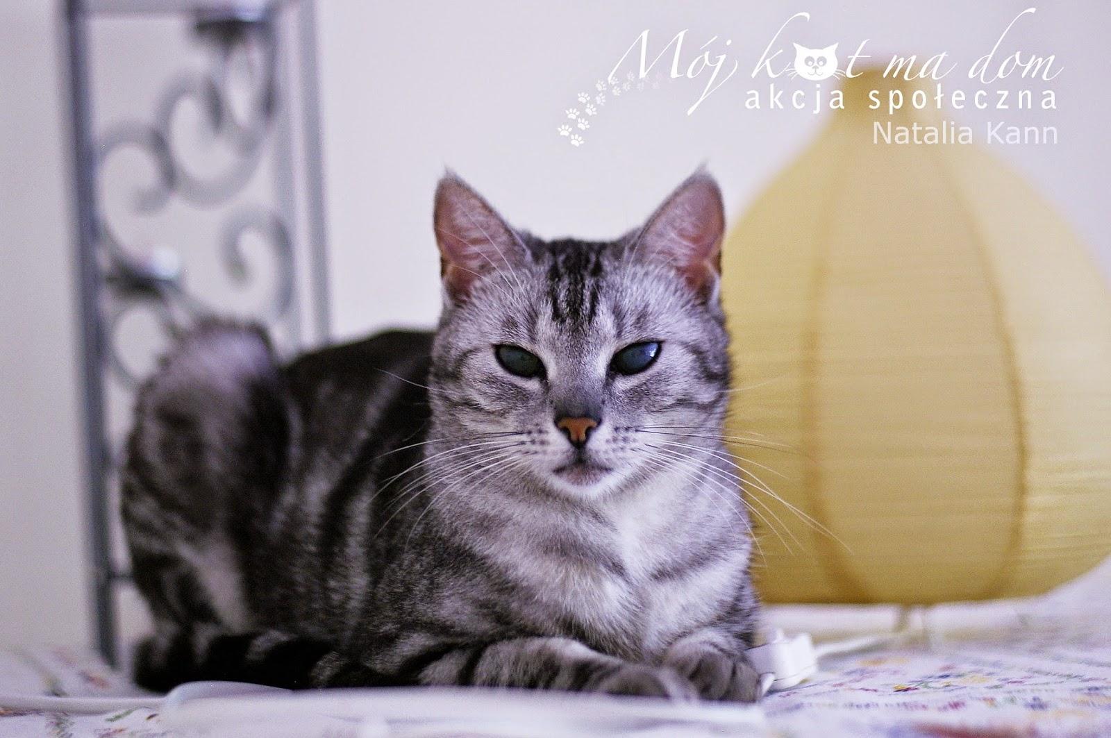 Twój kot chudnie? Dowiedz się, co może oznaczać utrata wagi - sunela.eu