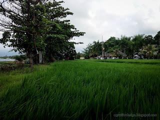 Green Rice Fields Beachfront Villa At Umeanyar Village, North Bali, Indonesia
