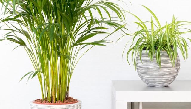 6 Φυτά που θα Καθαρίσουν τον Αέρα του Σπιτιού σας Αυτή την Άνοιξη