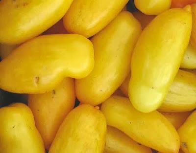 มะเขือเทศสีเหลือง