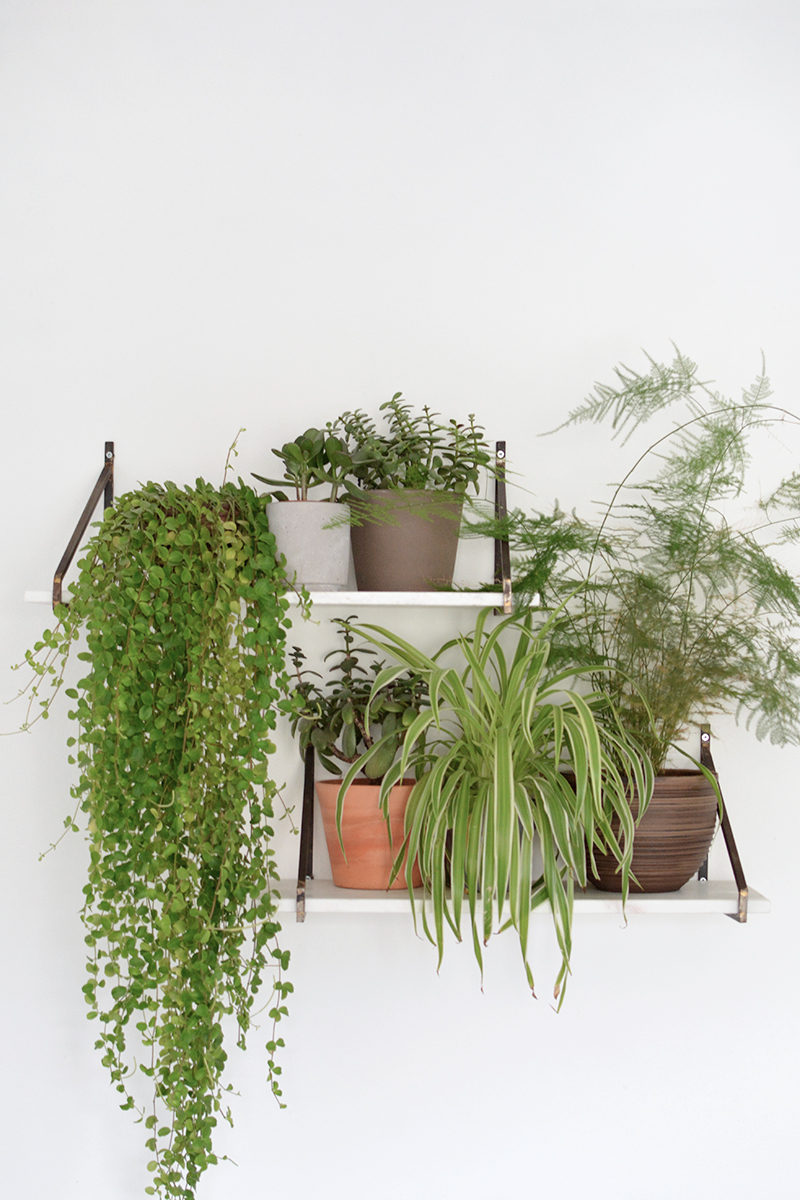 how to style a shelf, plant shelf
